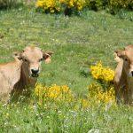 Un estudio identificará las estrategias de adaptación al cambio climático de la ganadería extensiva mediterránea