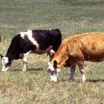 Las enfermedades emergentes y reemergentes en sanidad animal y sus implicaciones