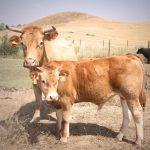 Andalucía establece la receta electrónica Recevet para las prescripciones veterinarias de antibióticos
