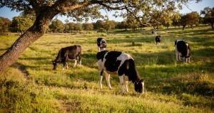 El nuevo espíritu de la PAC debe pasar por el empoderamiento de los productores lácteos no por las cuotas