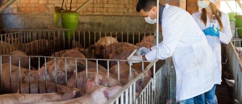 Los veterinarios aclaran dudas sobre el uso de antibióticos con el DARP y la Agencia española del medicamento