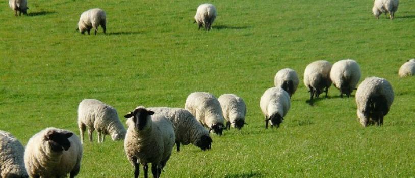 """Un estudio identifica el pastoreo como """"mejor regulador"""" de la biodiversidad"""