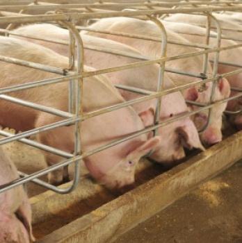Solicitan instalar una macrogranja porcina en el municipio manchego que acogerá un Almacén de Residuos Nucleares