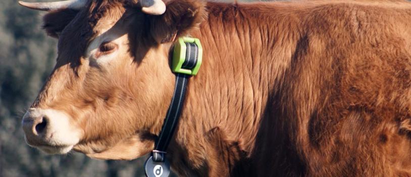 Digitanimal, preparada para cumplir los requisitos de ayudas para la localización de ganadería extensiva