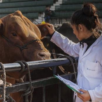 """""""Contamos con ustedes para manejar los antimicrobianos con cuidado"""" nueva campaña de la Organización Internacional de la Sanidad Animal"""