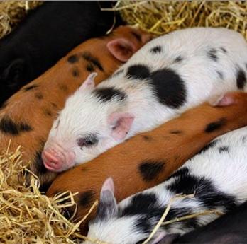 Caracteristicas de las funciones de la nutricion animal