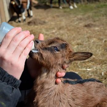 Productos Lacteos para Nutricion Animal