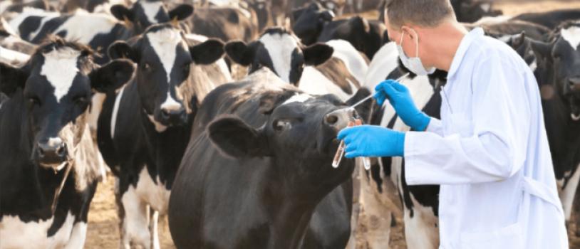El consumo de antibiótico ha disminuido el cuádruple en animales que en humanos