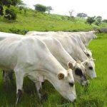 Más excrementos en los pastos por el uso de un antiparasitario para ganado