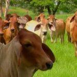 Nuevos pasos en el desarrollo de la estrategia de ganadería bovina sostenible
