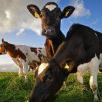 Un equipo internacional busca la adaptación de la ganadería extensiva al cambio climático en el sur de Europa