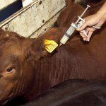 Los veterinarios informarán por vía electrónica de los antibióticos que receten en la ganadería